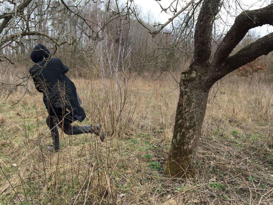 Blask na drzewach