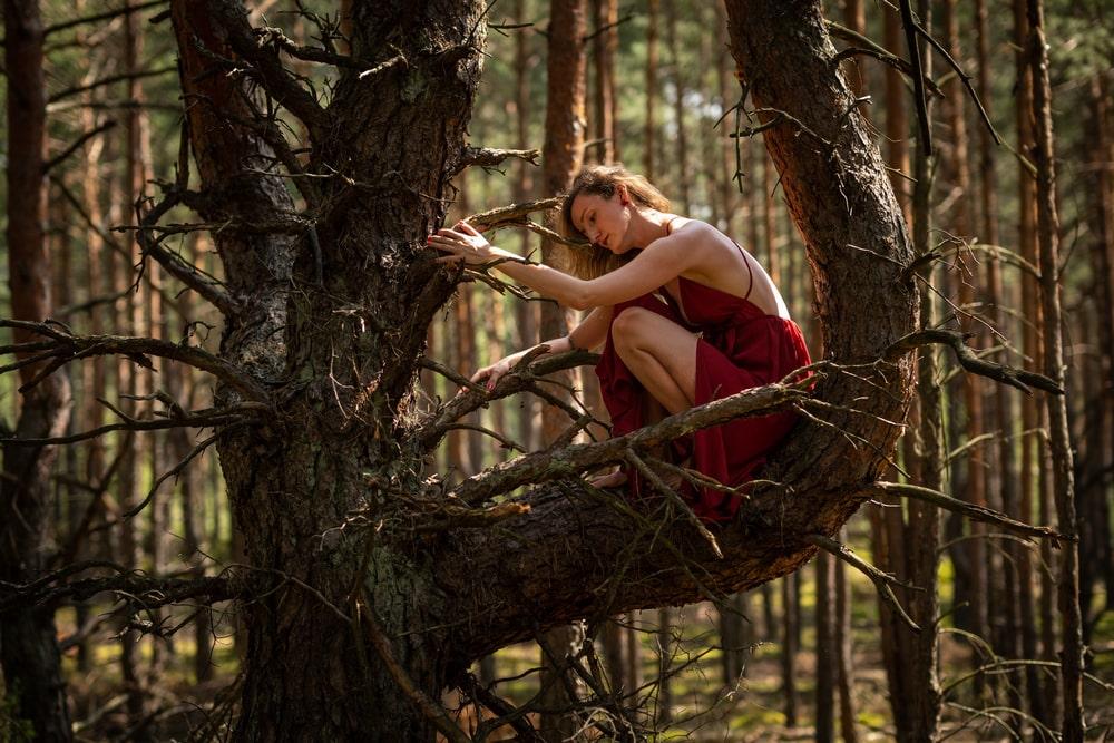 Fotografia: Paulina Święcańska w czerwonej sukni siedzi na gałęzi drzewa